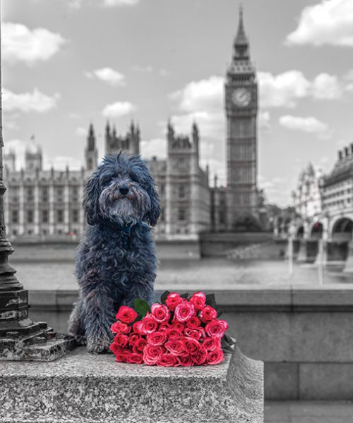 Dog by a lampost with bunch of Roses, London, UK